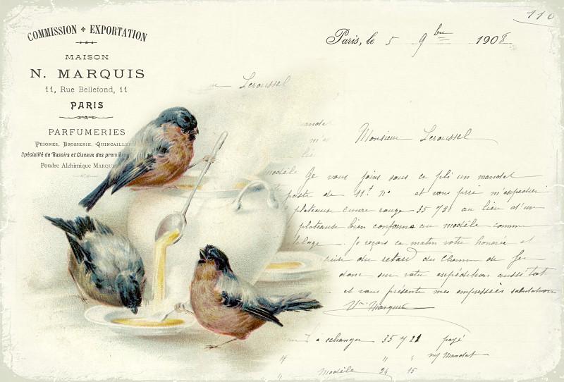 Vintage beautiful images - Birds - brown