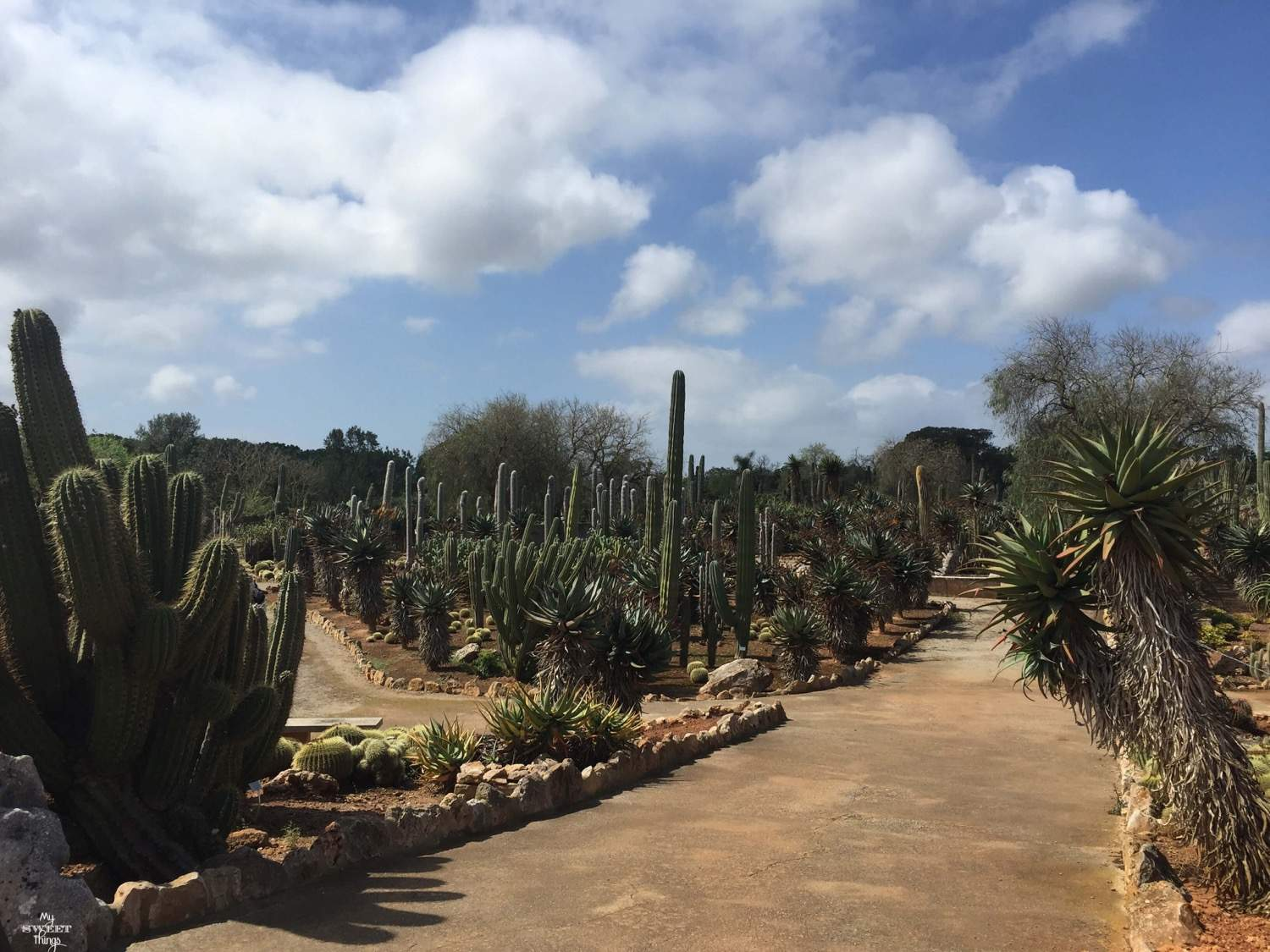 What to do in summer in Mallorca - Botanicactus - Botanical garden