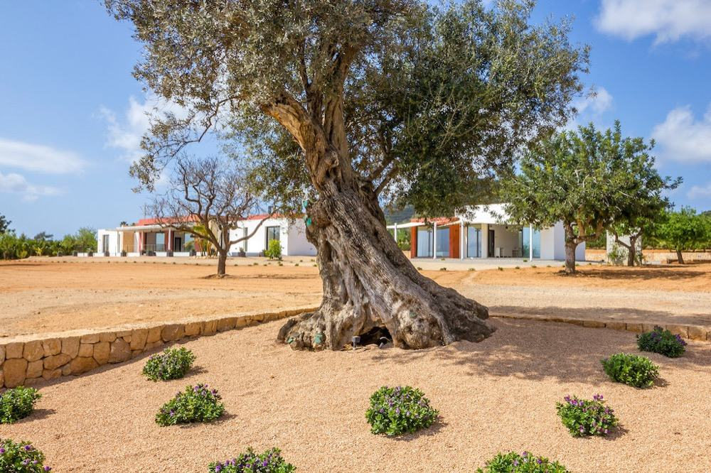 Modern property with sea views which has a bright and airy look · Old olive tree · Via www.sweethings.net