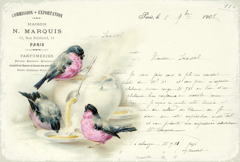Vintage beautiful images - Birds - Pink