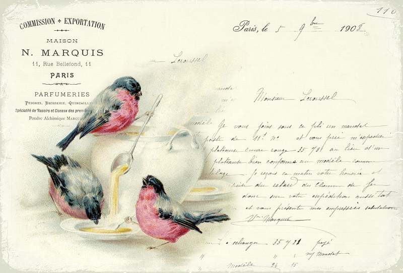 Vintage beautiful images - Birds - red