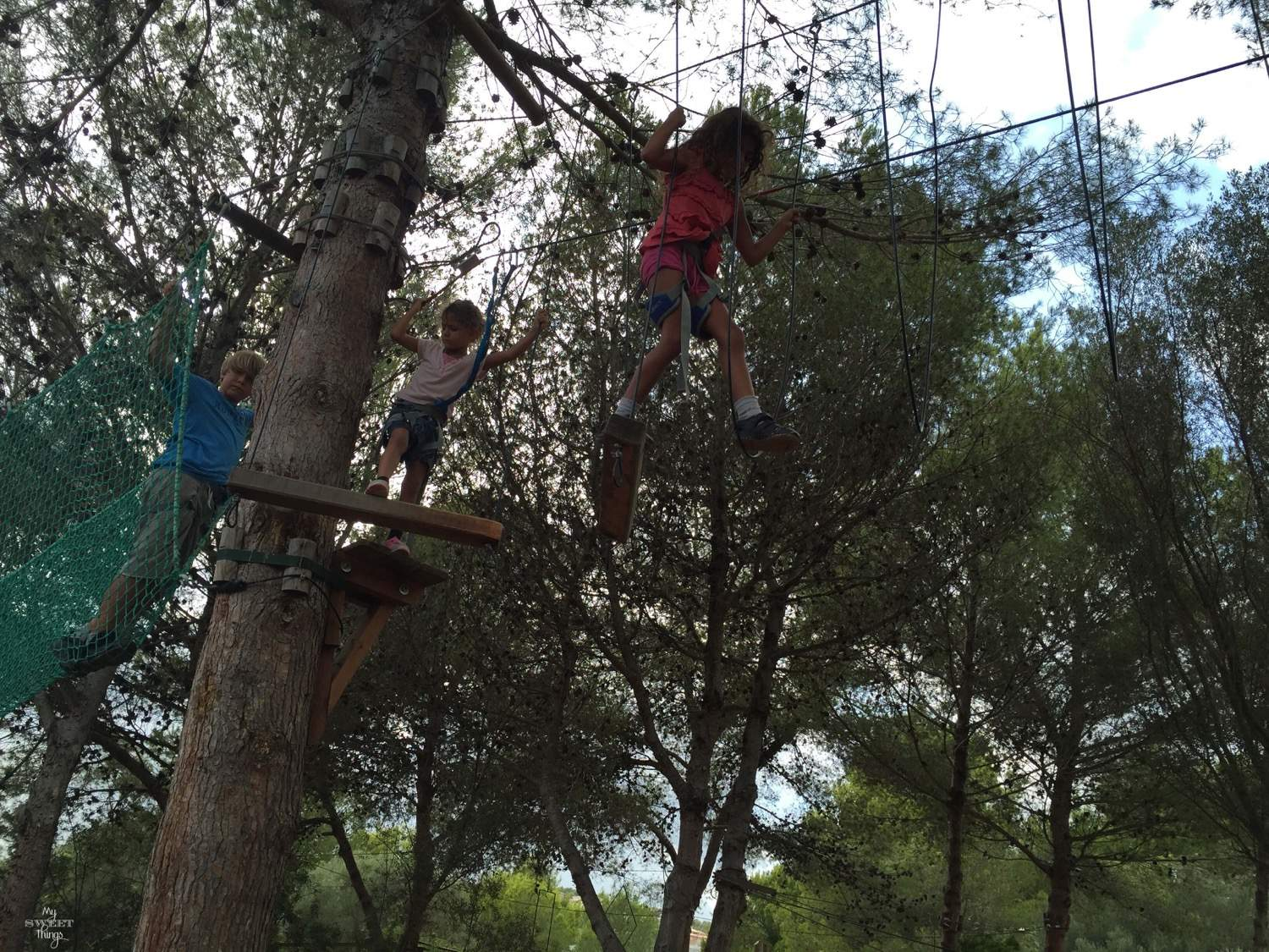 What to do in summer in Mallorca - Climbing trees