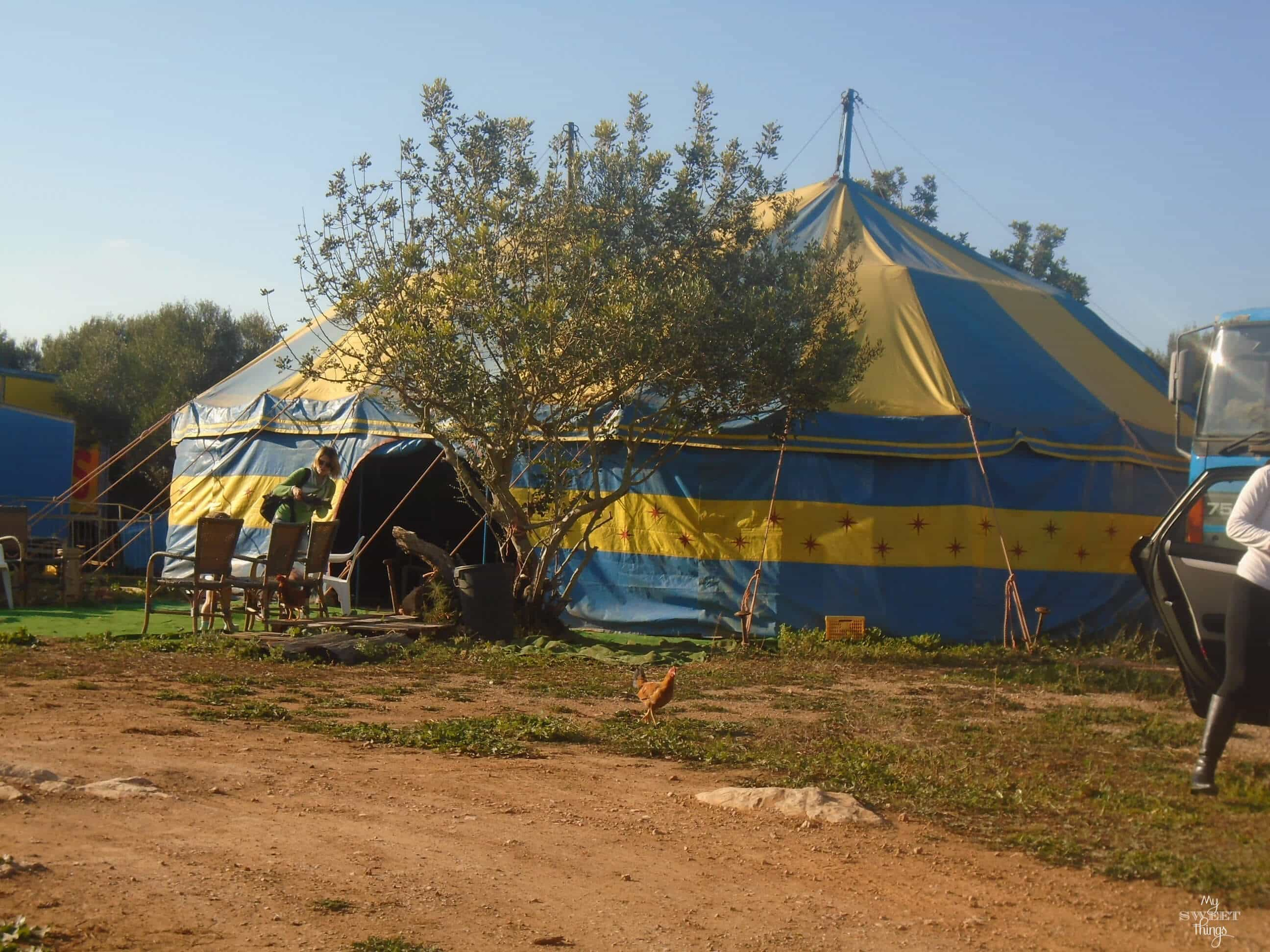 What to do in summer in Mallorca - Circus