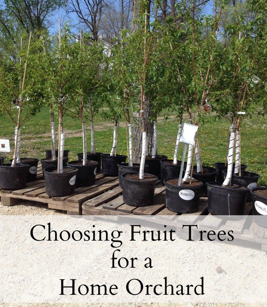 Amazing tricks for your backyard  ·  Modernize your backyard is not as difficult as it may sound. I am sharing some tips with are budget-friendly and eco-friendly too   ·  Choosing fruit trees  ·  Via www.sweethings.net